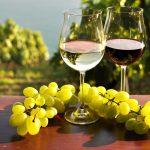 Acheter un vignoble : un bon moyen d'investir